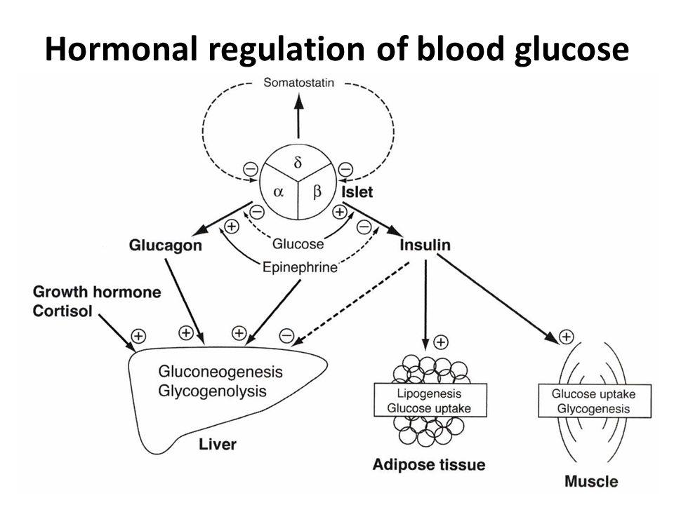 Glucose Quantitative Determination Ppt Download