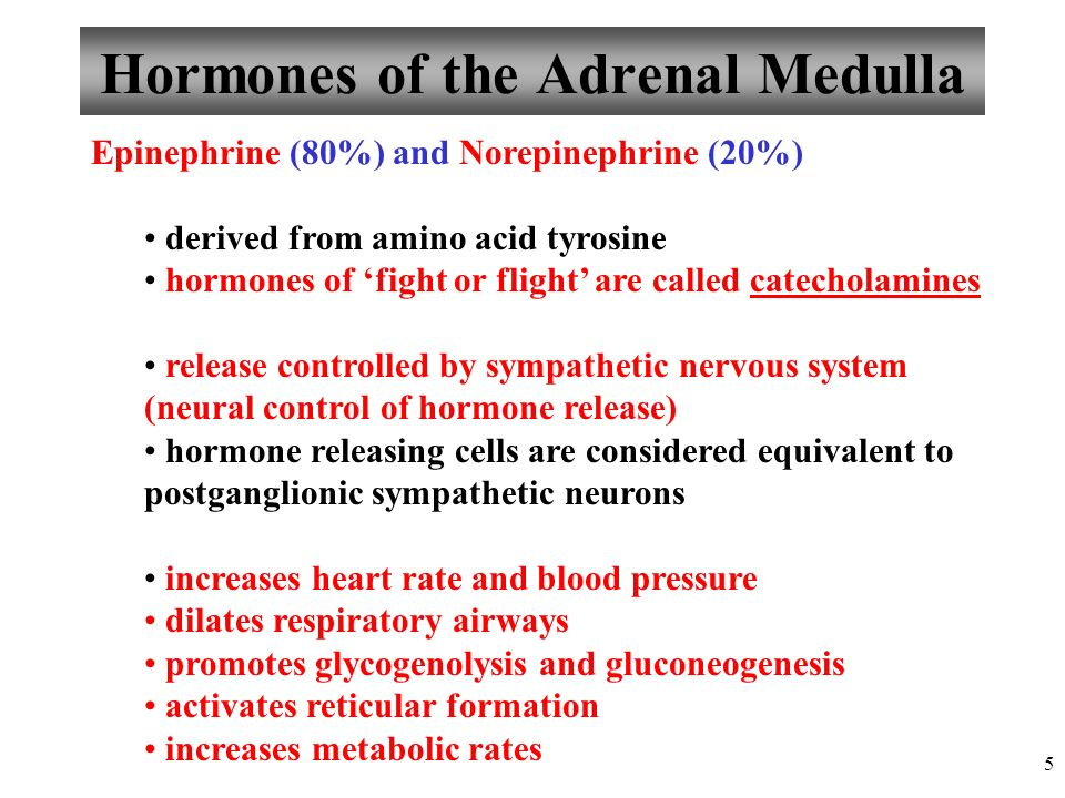 Chapter 16 Endocrine System Lecture Ppt Video Online Download