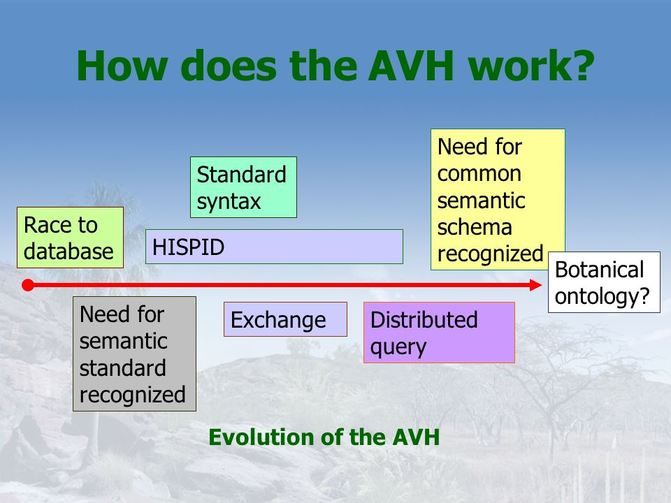 How does the AVH work Need for common semantic schema recognized