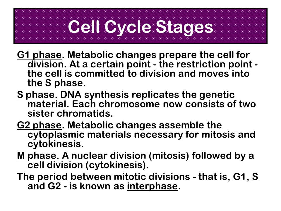 Cell Cycle Stages
