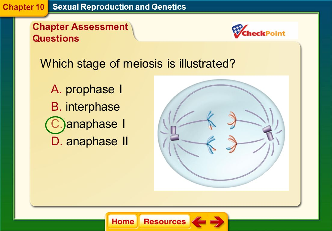Which stage of meiosis is illustrated