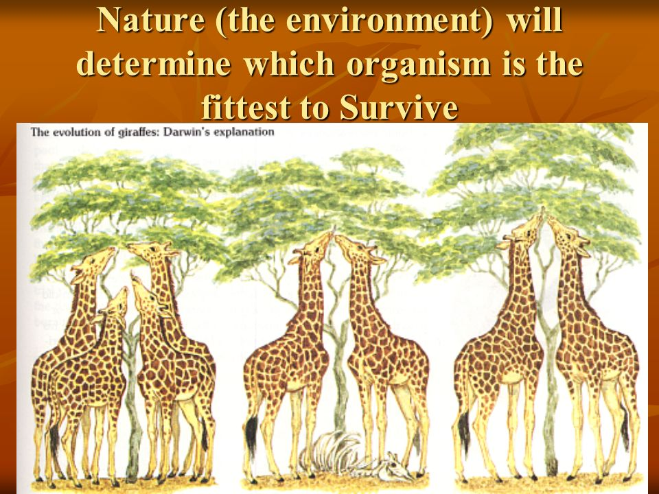 Nature (the environment) will determine which organism is the fittest to Survive
