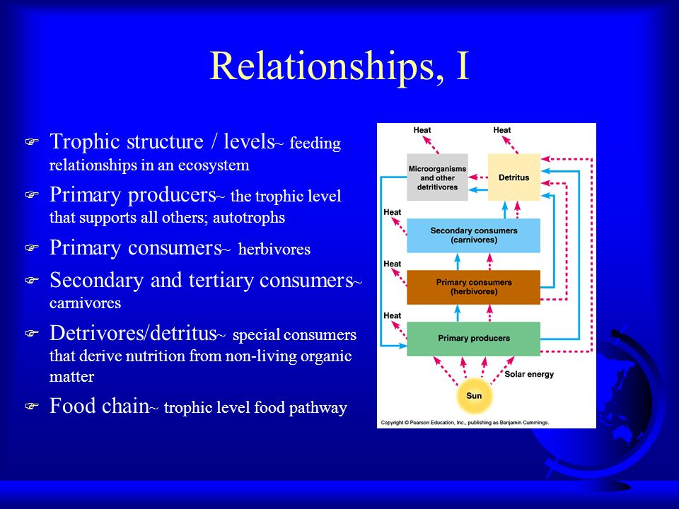 Relationships, I Trophic structure / levels~ feeding relationships in an ecosystem.