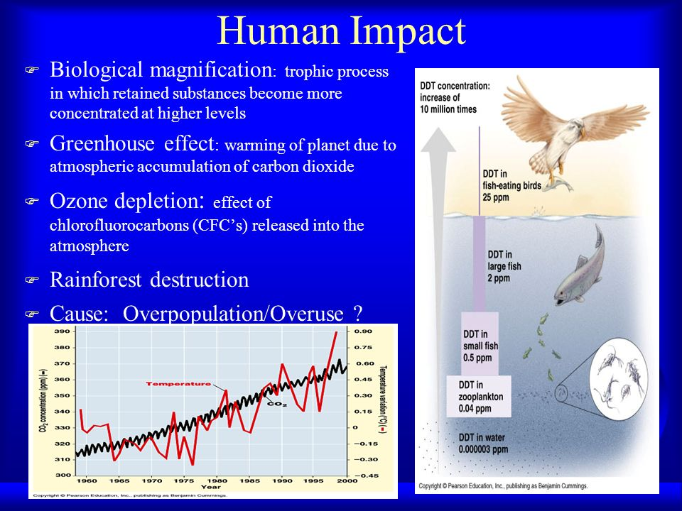 Human Impact Biological magnification: trophic process in which retained substances become more concentrated at higher levels.