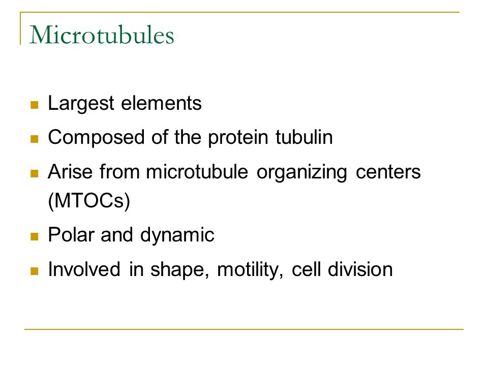 Microtubules Largest elements Composed of the protein tubulin