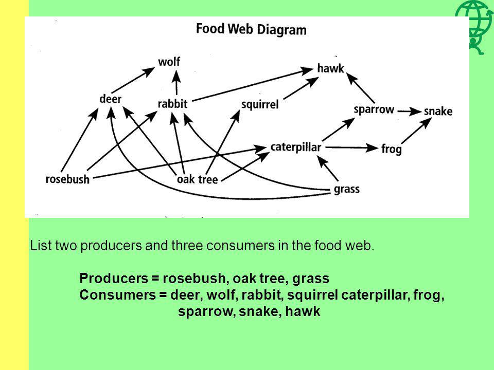 List two producers and three consumers in the food web.