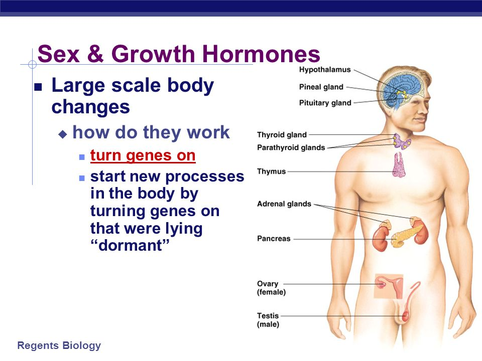 Sex & Growth Hormones Large scale body changes how do they work
