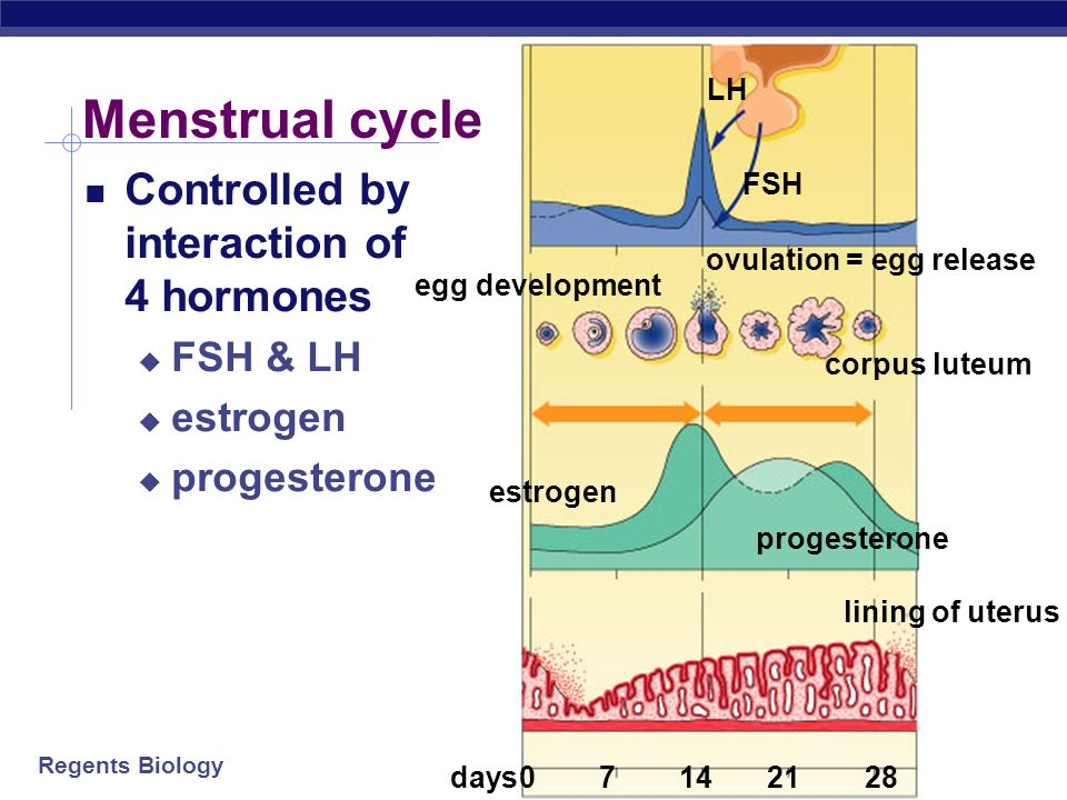Menstrual cycle Controlled by interaction of 4 hormones FSH & LH