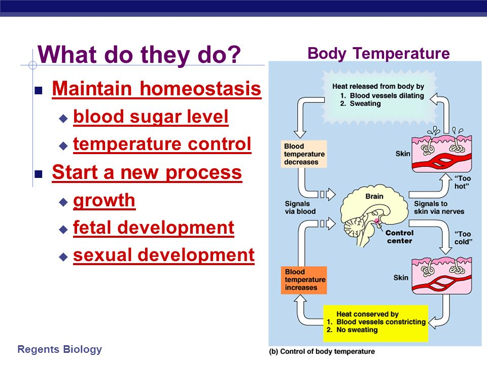 What do they do Maintain homeostasis Start a new process