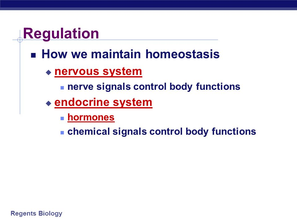 Regulation How we maintain homeostasis nervous system endocrine system