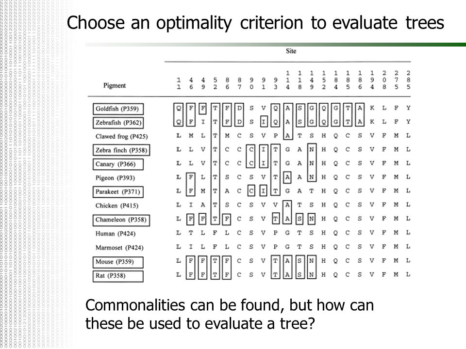 Choose an optimality criterion to evaluate trees
