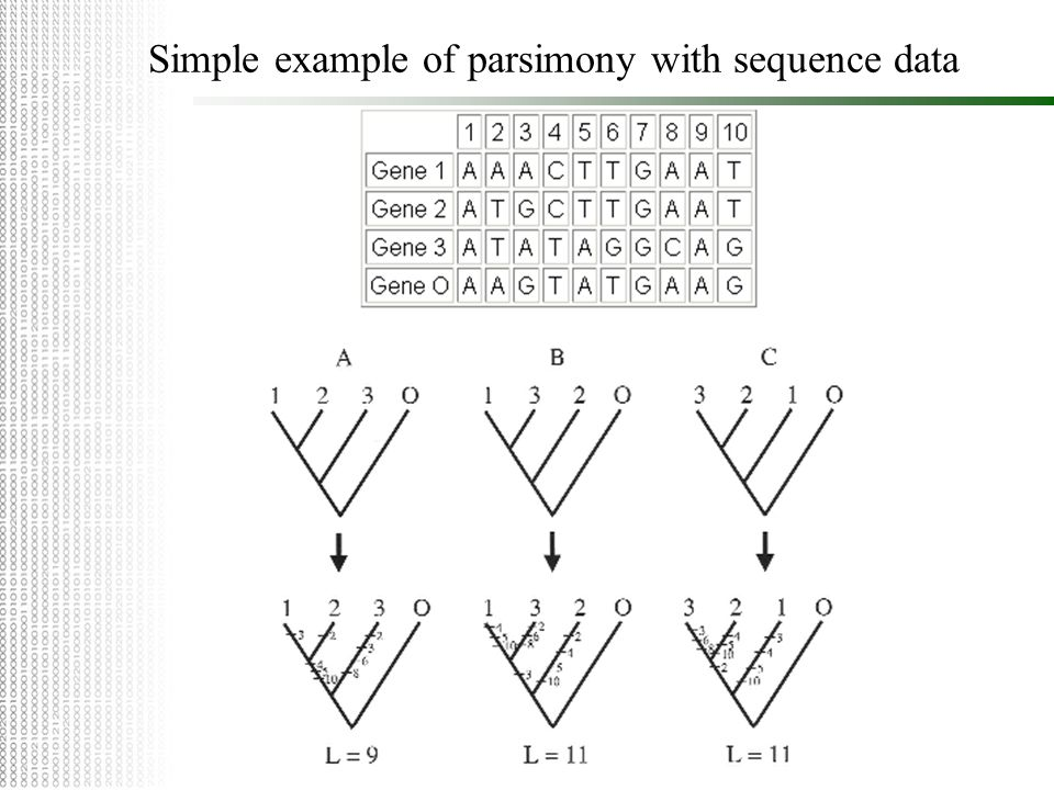 Simple example of parsimony with sequence data