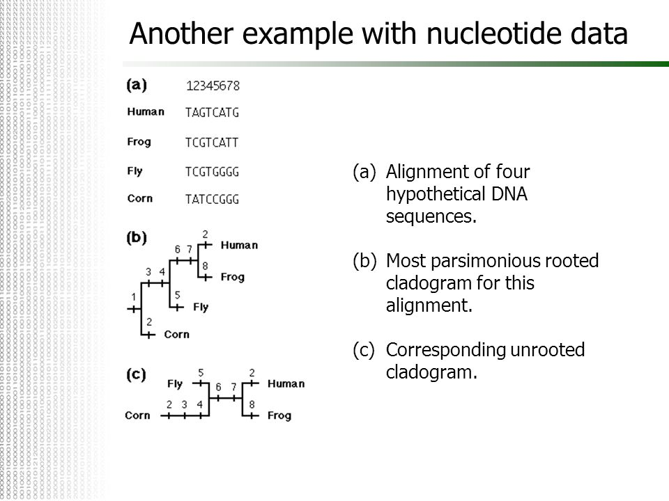 Another example with nucleotide data