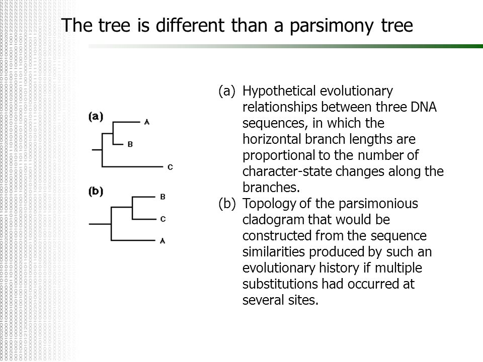 The tree is different than a parsimony tree