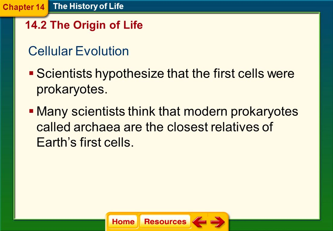 Scientists hypothesize that the first cells were prokaryotes.
