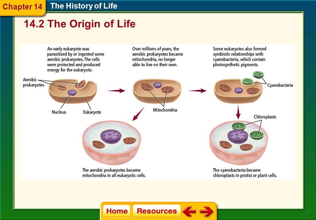 Chapter 14 The History of Life 14.2 The Origin of Life