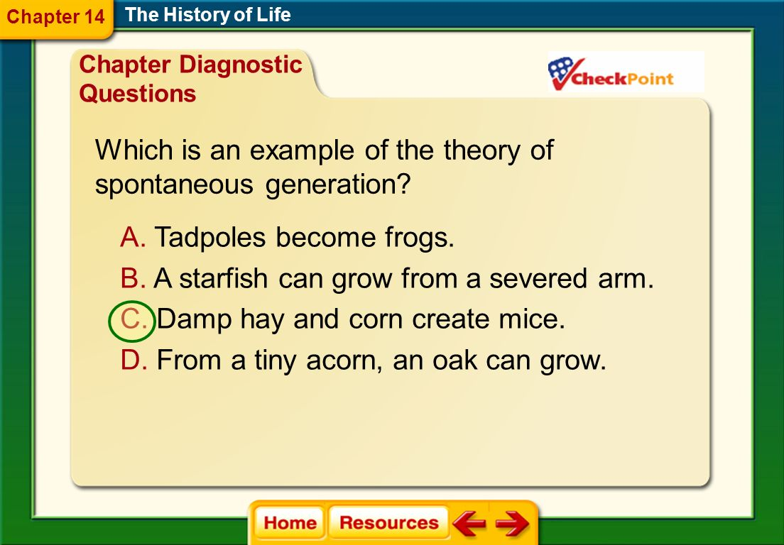 Which is an example of the theory of spontaneous generation