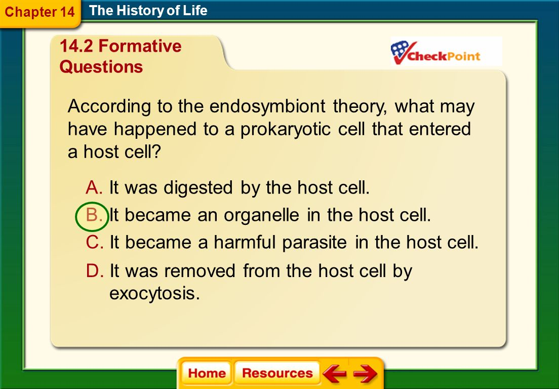 According to the endosymbiont theory, what may