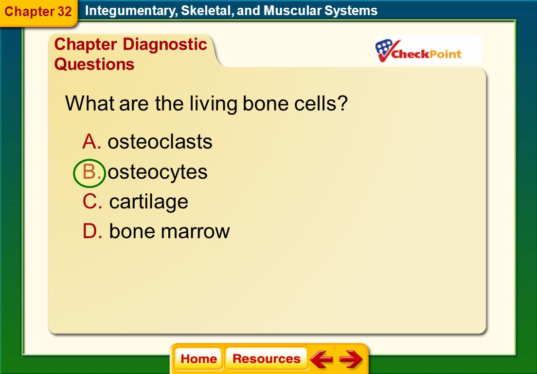 What are the living bone cells