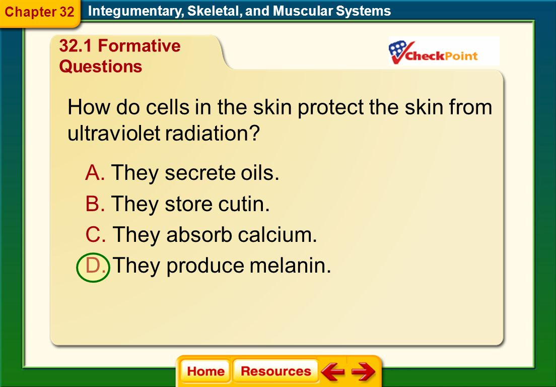 How do cells in the skin protect the skin from ultraviolet radiation
