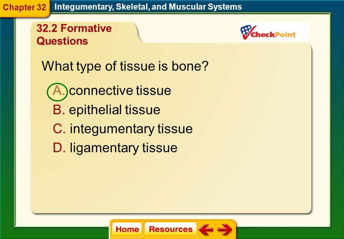 What type of tissue is bone