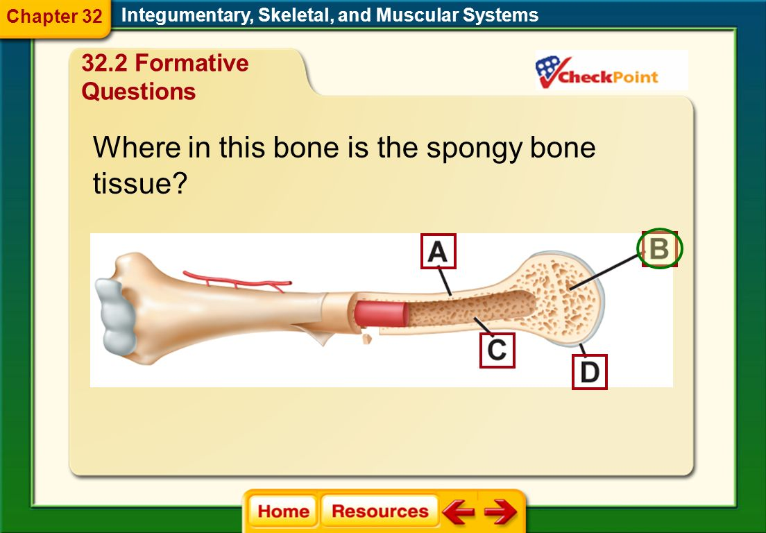 Where in this bone is the spongy bone tissue