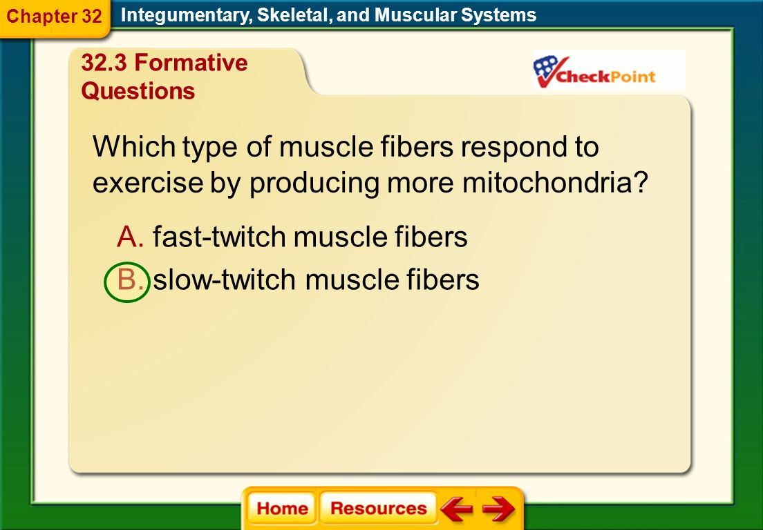 Which type of muscle fibers respond to
