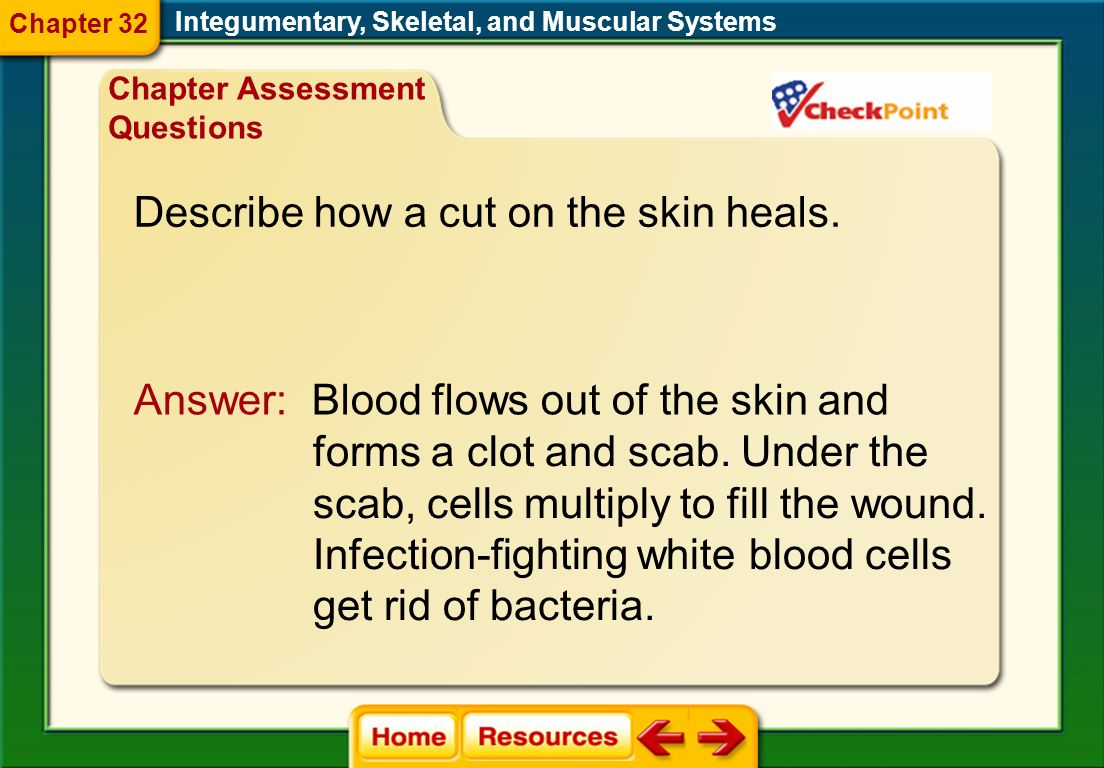 Describe how a cut on the skin heals.