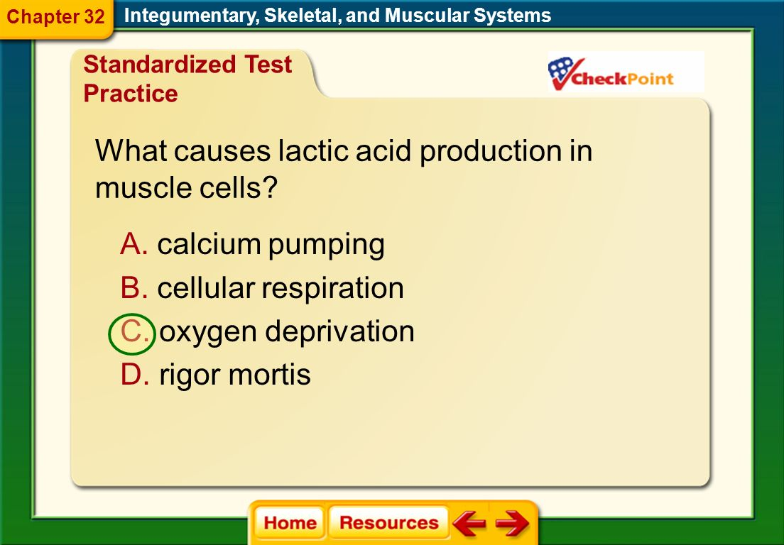 What causes lactic acid production in muscle cells