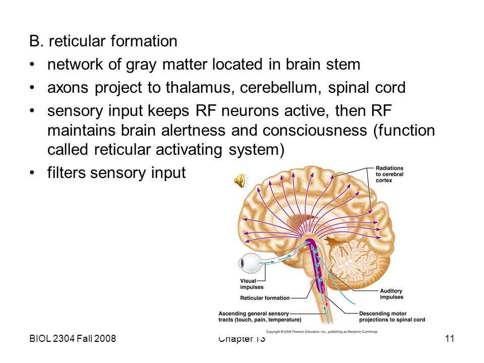 network of gray matter located in brain stem