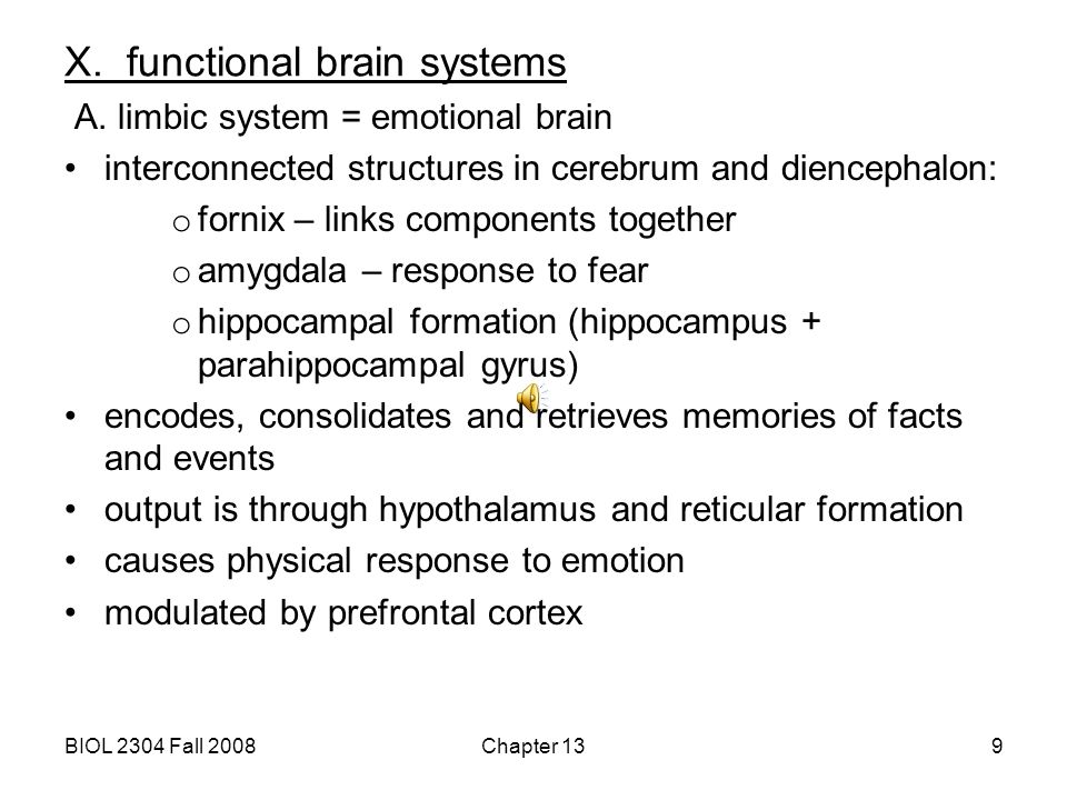 X. functional brain systems