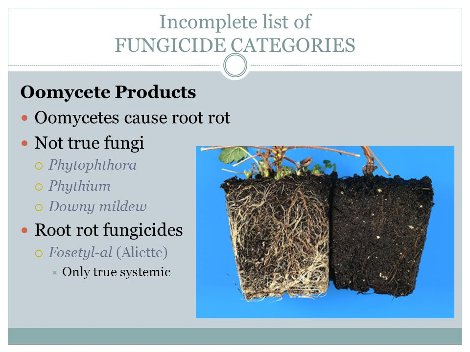 FUNGICIDES  - ppt video online download