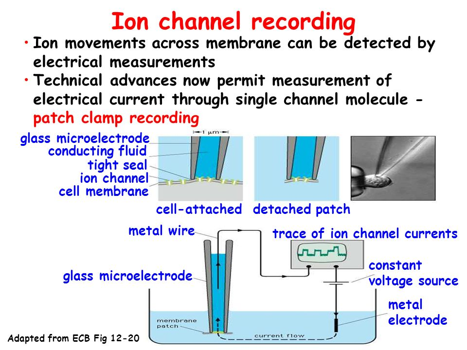 Ion channel recording Ion movements across membrane can be detected by electrical measurements.