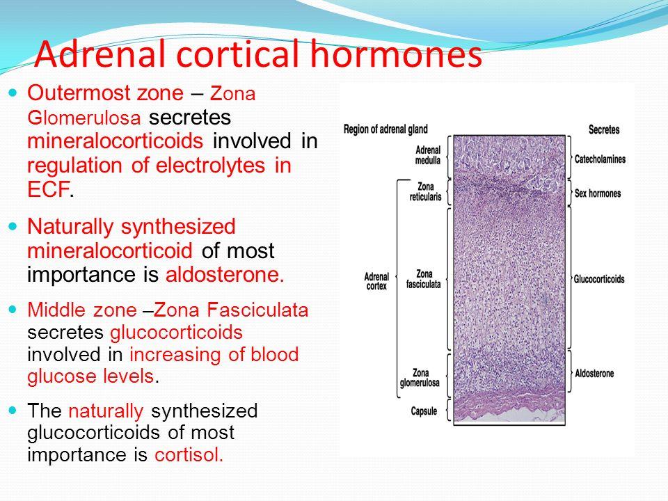 Professor Of Biochemistry Adrenal Cortical Hormones Ppt Download