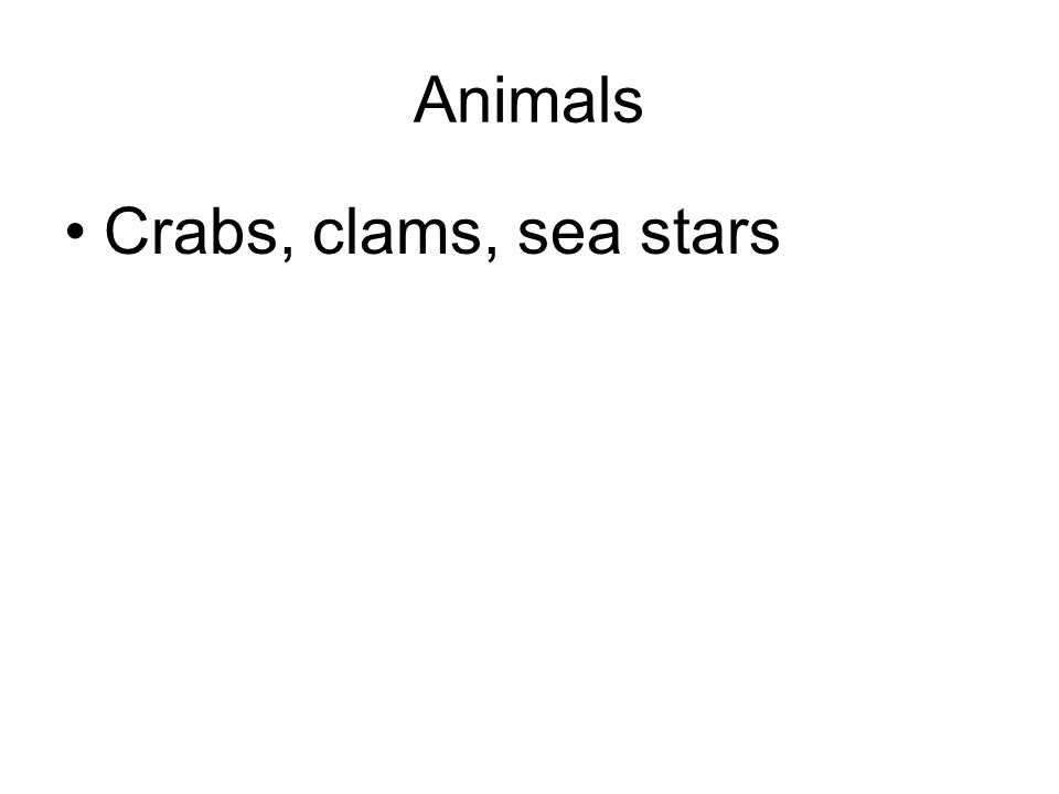 Animals Crabs, clams, sea stars