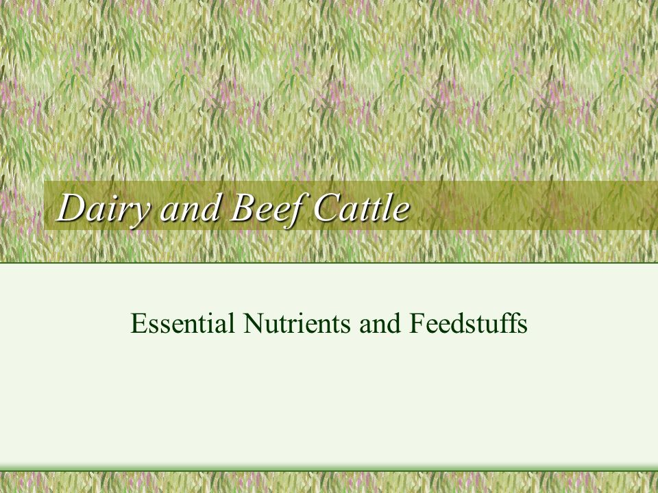 Essential Nutrients and Feedstuffs