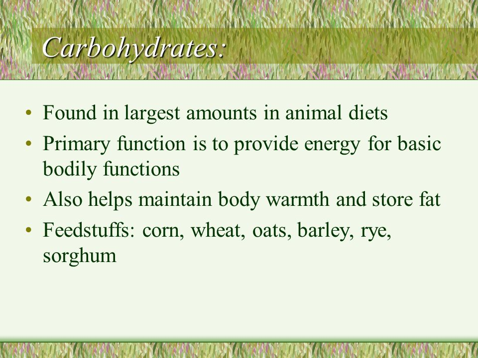 Carbohydrates: Found in largest amounts in animal diets
