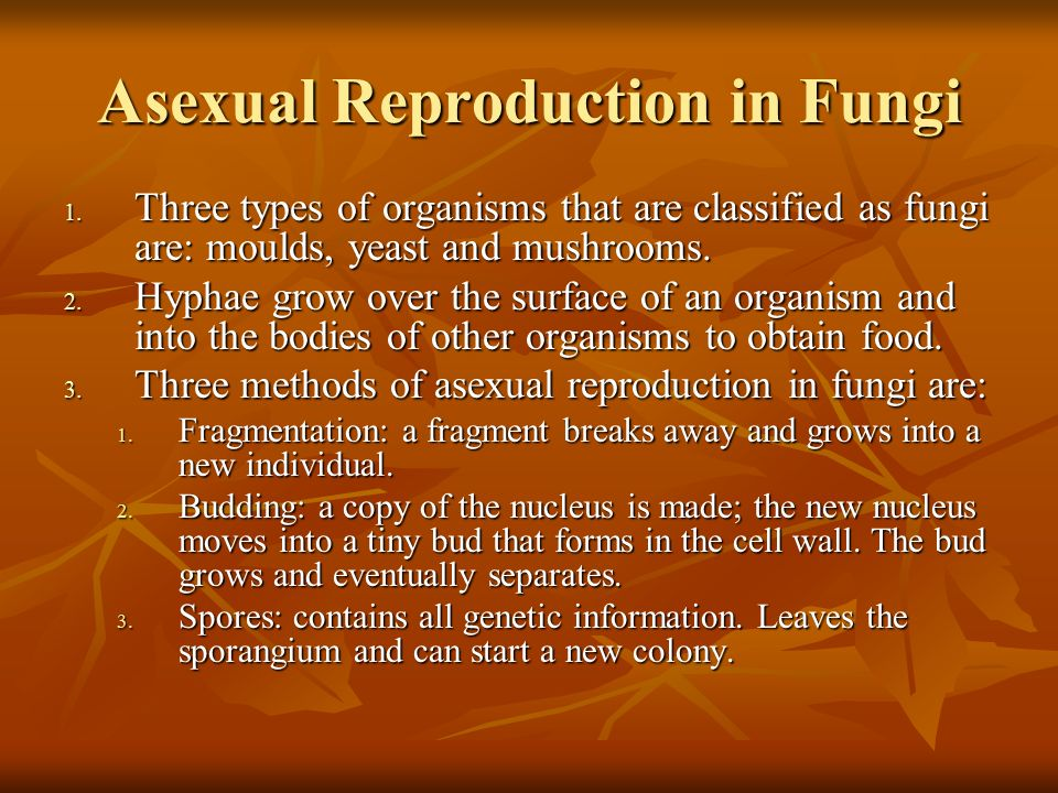 Advantages of asexual reproduction in fungi occurs