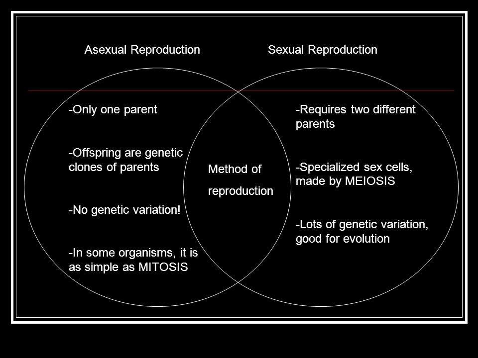 How do asexual and sexual reproduction compare vehicles
