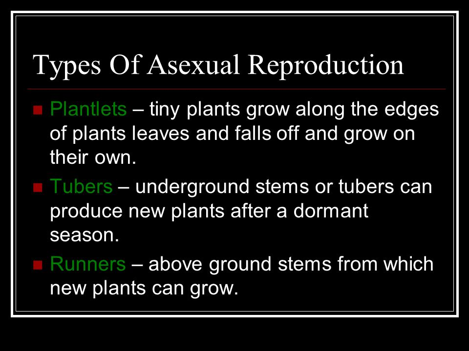 Plantlets asexual propagation worksheet