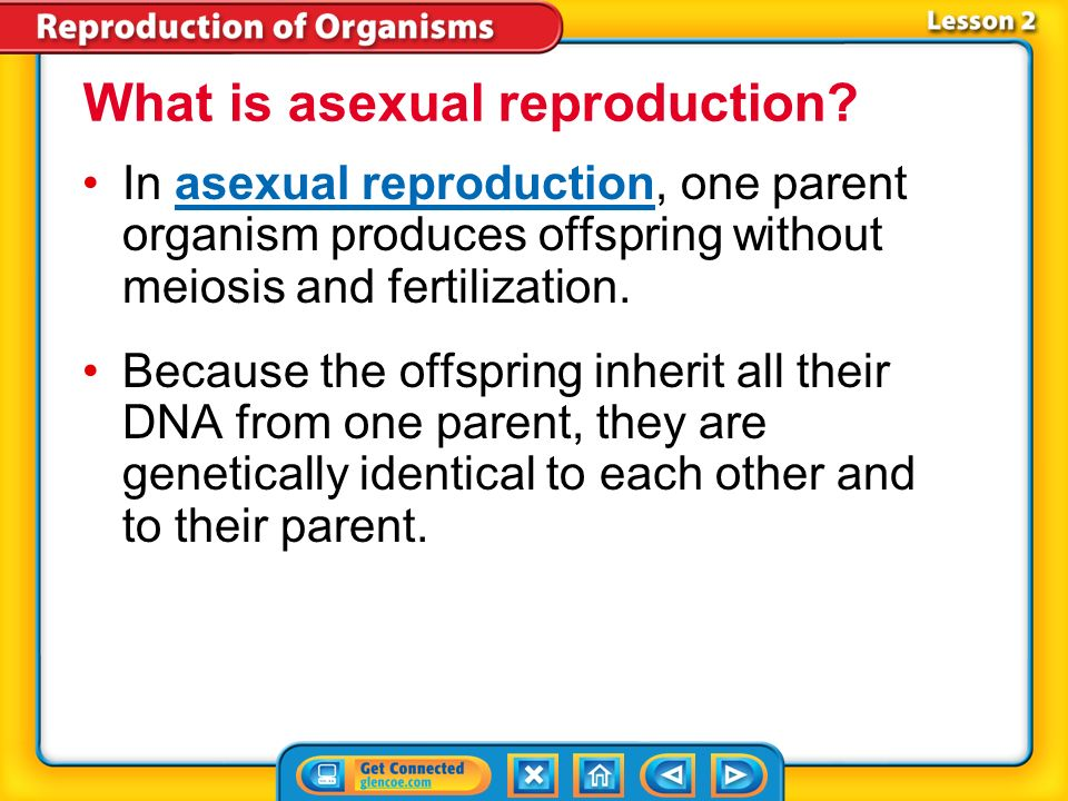 What is asexual reproduction called