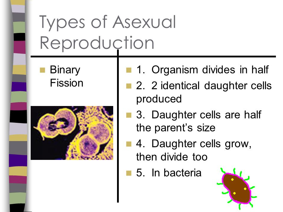 3 types of asexual reproduction photos 264