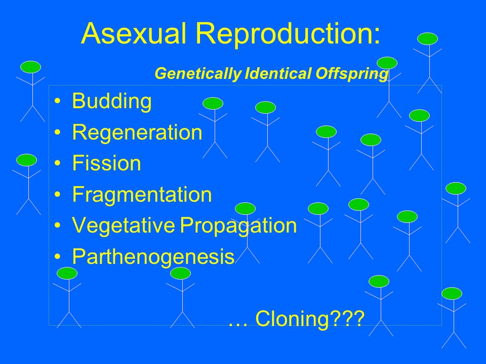 Difference between offspring asexual reproduction regeneration
