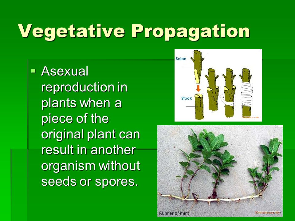 Asexual reproduction in plants regeneration technologies