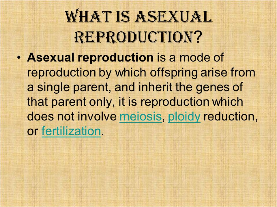 Key features of asexual reproduction