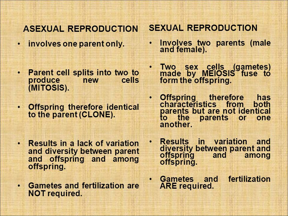 Sources of variation in asexual reproduction how many parents
