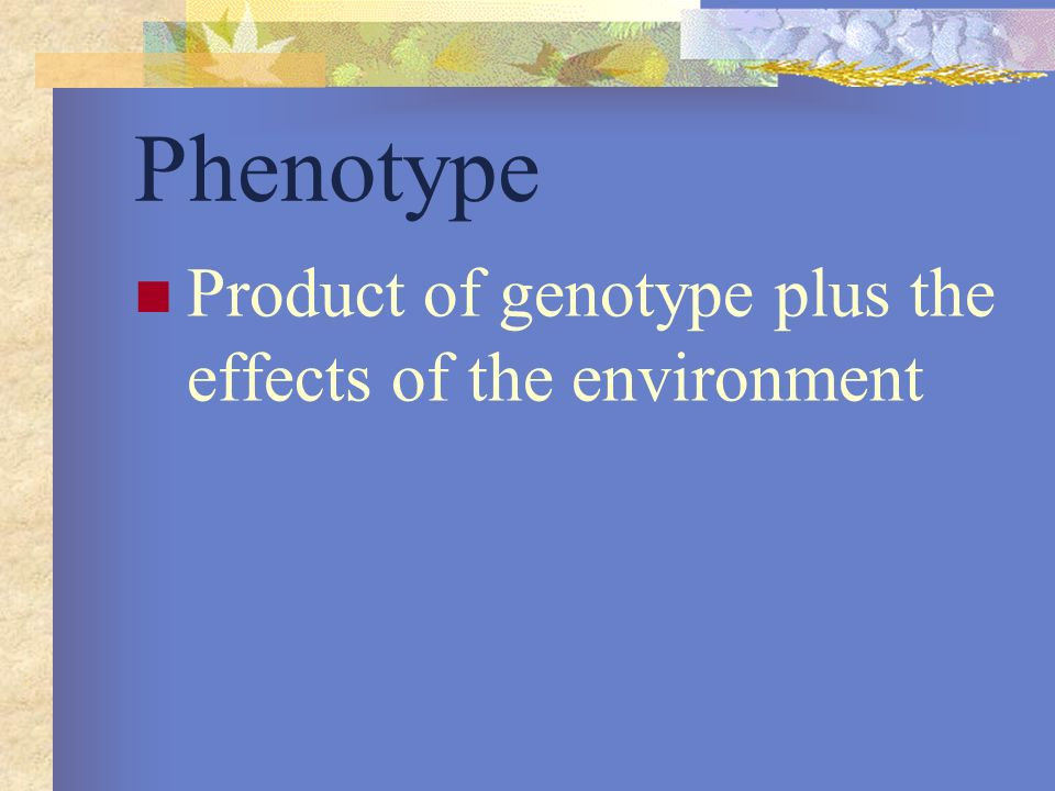 Phenotype Product of genotype plus the effects of the environment
