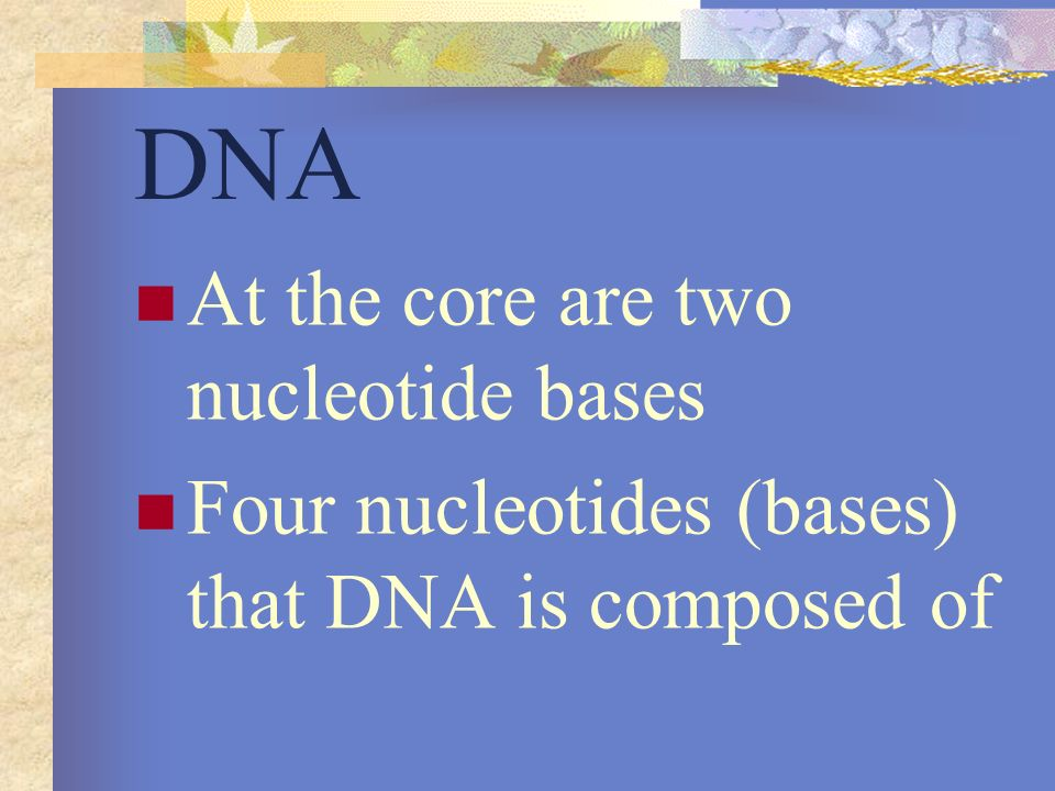 DNA At the core are two nucleotide bases