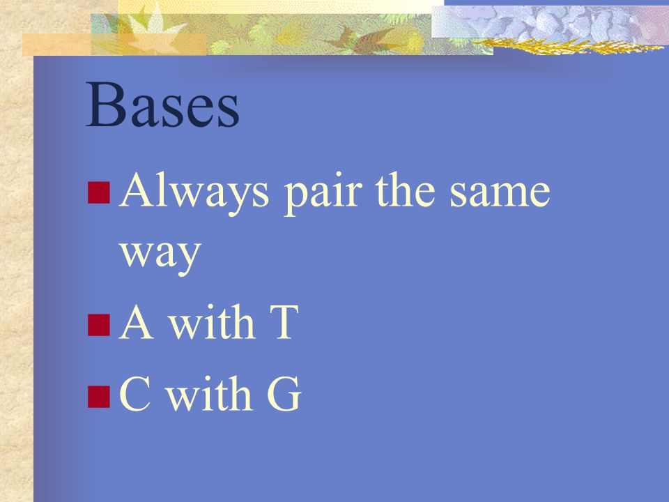 Bases Always pair the same way A with T C with G
