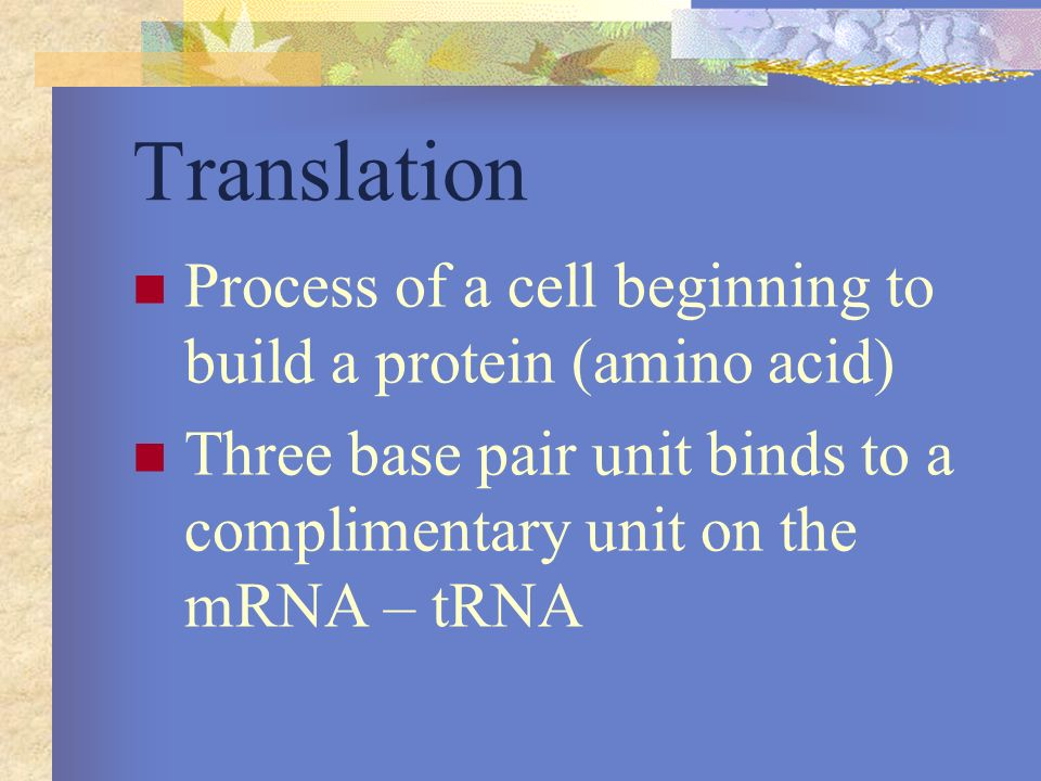 Translation Process of a cell beginning to build a protein (amino acid) Three base pair unit binds to a complimentary unit on the mRNA – tRNA.